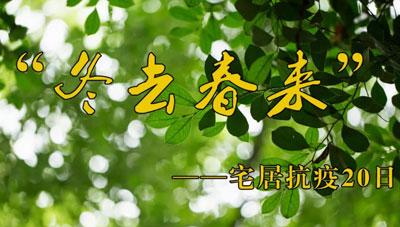"""""""冬去春来""""——宅居抗疫20日"""